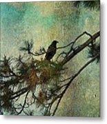 The Old Pine Tree Metal Print
