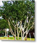 Trees In A Suburban Neighborhood In Summer Metal Print