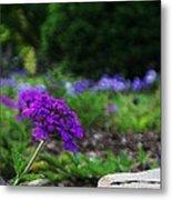 Violet Flower Metal Print