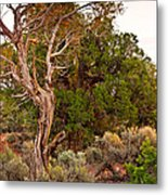 Weathered Tree Sunrise Canyon Dechelly Metal Print