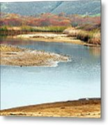 Wetlands Of Scott Creek Metal Print