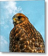 What Are You Looking At Red Shoulder Hawk Metal Print