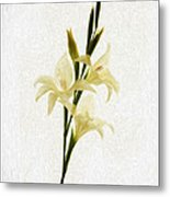 White Gladiolus Mixed Media Painting Metal Print
