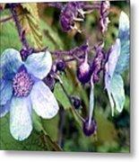 Wild Blue Rose Metal Print