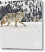 Winter's Determination Metal Print