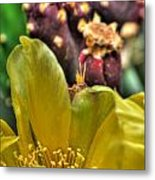 001 For The Cactus Lover In You Buffalo Botanical Gardens Series Metal Print