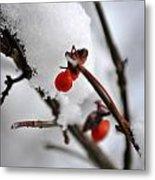 001 Frozen Berries Metal Print
