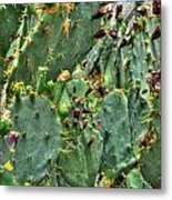 002 For The Cactus Lover In You Buffalo Botanical Gardens Series Metal Print