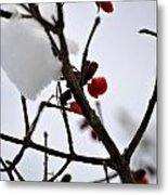 002 Frozen Berries Metal Print