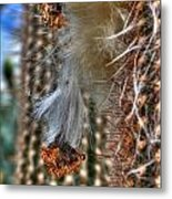 004 For The Cactus Lover In You Buffalo Botanical Gardens Series Metal Print