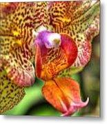 004 Orchid Summer Show Buffalo Botanical Gardens Series Metal Print