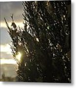 005 Peaking Winter Sunrise Metal Print