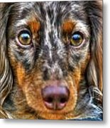 0054 Puppy Dog Eyes Metal Print