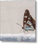 01 Southern White Admiral Butterfly Metal Print