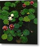 0151-lily -  Colored Photo 1 Metal Print