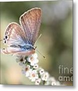 02 Long-tailed Blue Butterfly Metal Print