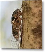 02 New Forest Cicada  Metal Print