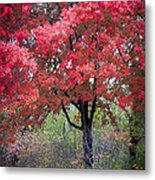 0277 Blazing Red Metal Print