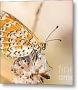 03 Lesser Spotted Fritillary Metal Print
