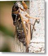 03 New Forest Cicada  Metal Print