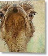 Ostrich Closeup Metal Print