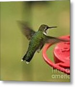 Ruby-throated Hummingbird  Metal Print