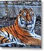 0013 Siberian Tiger Metal Print