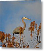7- Great Blue Heron Metal Print
