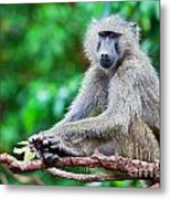 A Baboon In African Bush Metal Print