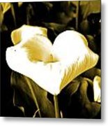 A Flower In The Shadows Metal Print