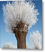 A Frosted Willow On A Very Cold And Bright Winter Day Metal Print
