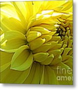 Golden Dahlia Metal Print