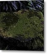 A Moss Covered Stone Inside The National Orchid Garden In Singapore Metal Print