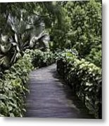 A Raised Walking Path Inside The National Orchid Garden In Singapore Metal Print