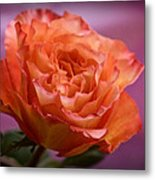 A Rose For Saturday Metal Print