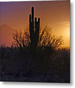 A Sonoran Morning  Metal Print