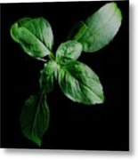 A Sprig Of Basil Metal Print