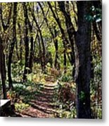 A Walk In The Woods Metal Print
