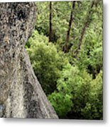 A Young Boy Climbs In Yosemite, June Metal Print