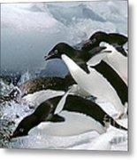 Adelie Penguins Metal Print