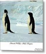 Adelie Penguins Metal Print by David Barringhaus