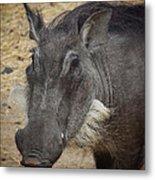 African Boar Metal Print
