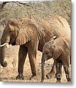 African Elephant Mother And Calf Metal Print