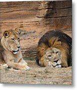 African Lion Couple 3 Metal Print