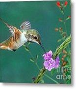 Allens Hummingbird Metal Print