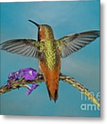 Allens Hummingbird Male Metal Print