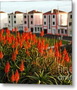 Aloe Flowers Metal Print