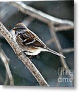 American Tree Sparrow  Metal Print
