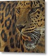Amur Leopard 1 Metal Print