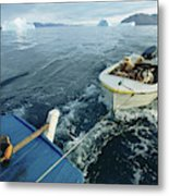 An Inuit Hunter Ferries His Sled Dogs Metal Print
